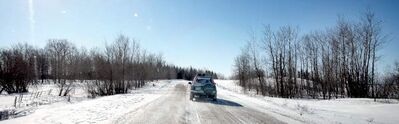 Jim and Patsy Duncan spend winter months exploring rural Manitoba for Northern Hawk and Great Grey Owls.