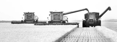 Phil Hossack / Winnipeg Free Press Farmers harvest a crop of early wheat north of Rosenort Thursday afternoon.