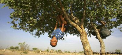 Children of the Basarwa tribe, nomadic hunter-gatherers who have survived for over 20,000 years in the stark desert plains of central Botswana, play on a tree in the Kaudwane settlement outside the Kalahari Game Reserve.