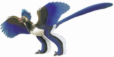 Some dinosaurs evolved feathers, but archaeopteryx has long been thought to be the earliest bird.