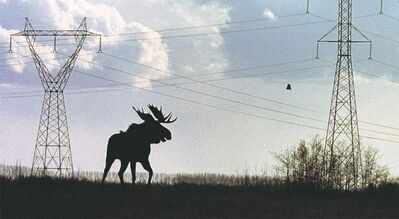 The derby was organized by the community as a way to interest more people to participate in moose hunting.