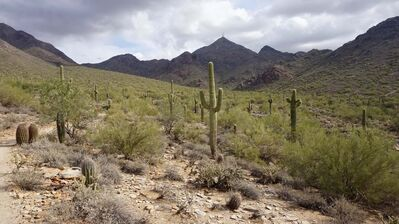 Cactus near Gateway Loop.</p>