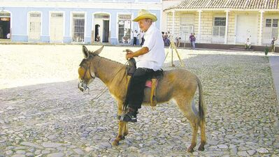 An old man poses on his donkey in Plaza Mayor, Trinidad. He, his cigar and his donkey are fixtures in this square.