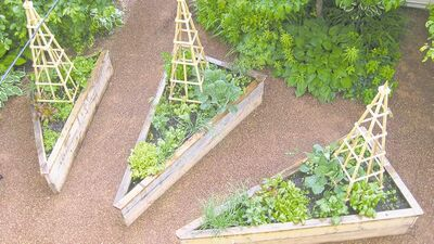 The soil in raised beds warms up faster in spring and drains more easily than ground level plots. Shown: triangle-shaped wooden boxes sit on crushed red shale. Plants include green onions, Brussel sprouts, lettuce, kale, chard, and celery.  Include annuals such as nasturtium, alyssum and marigolds to attract pollinators.