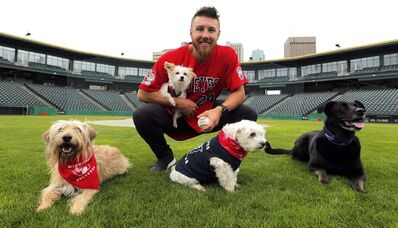 BORIS MINKEVICH / WINNIPEG FREE PRESS</p><p>Goldeyes pitcher Edwin Carl holds his Maltese-Yorkie mix Snooks with fellow canines (from left) Desi, Speirs family dog Bogey and Rue.</p>