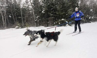 Darren Bailey, being pulled by Skylar and Montana, in the  6th annual Snow Motion Classic, in Birds Hill Park, Sunday.