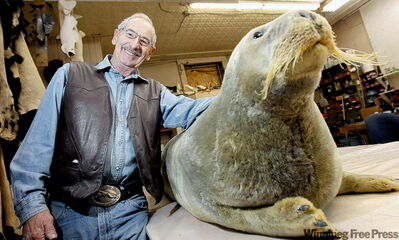 Jim Baxter of Telesky Taxidermy with a bearded seal from the Arctic that is going to be shipped to a museum in Poland.