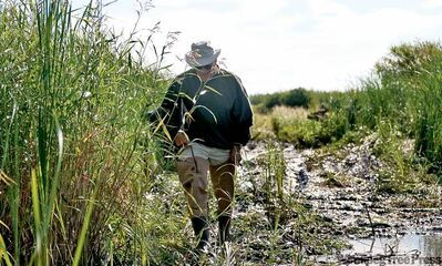 Dennis Anderson trudges through mud in the Netley-Libau Marsh where he grew up. The marsh has been flooded recently by water flowing in from Lake Winnipeg.