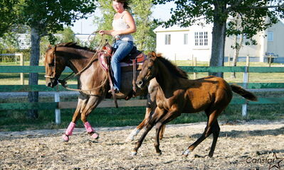 Sarah Southwell works with two of the horses at Hi Point Horsemanship, proposed site of Equine Oasis.