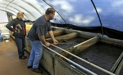 In this Jan. 4, 2012, photo, Imperial Tropical's breeding manager Kevin Kramer, right, nets fish as owner Fran Drawdy looks on at their tropical fish farm in Lakeland, Fla. Almost all the nation's domestically-raised tropical and ornamental fish come from Florida, and when cold weather strikes the results can be devastating. It will be days, if not weeks, before farmer Fran Drawdy discovers how the recent cold snap will affect her fish. (AP Photo/Chris O'Meara)