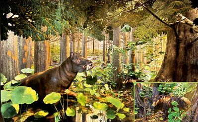 A hippopotamus-like coryphodon dines on lush vegetation during the Arctic's warm Eocene age.