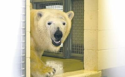 Handout photoThe public will be able to see Hudson live in the fur in about a month following a routine quarantine.