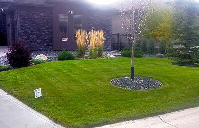 Here commercial-grade lawn edging has been used to edge the beds and trees. The ground cover used is Black Pier Stone.