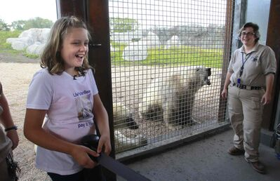 Olivia Clement,11, from the Ottawa area who has raised over $12,000 for polar bear conservation (donation to the World Wildlife Fund) got an opportunity to take part in the positive reinforcement training of the polar bears Storm and Hudson with bear keepers Jesse Kindzierski at the Assiniboine Park Zoo.