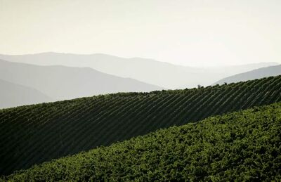Mediterranean Europe is the birthplace of wine as we know it today.
