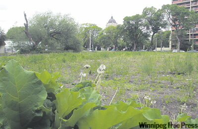 KEN GIGLIOTTI / WINNIPEG FREE PRESS Vacant riverfront property along Assiniboine Avenue at Kennedy Street has gone to the weeds.