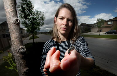 City Forester Martha Barwinsky holds a tent catipillar next to a tree in Transcona Monday.