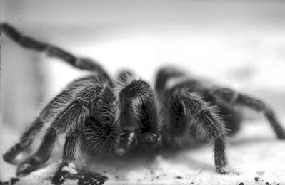 I am not afraid of spiders -- as long as they don't come lunging out at me in the bathroom.