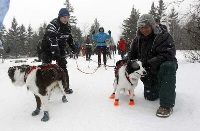 Genevieve Montcombroux and Les Fabo hold Razzie and Dina steady for Susie Strachan, at the 6th annual Snow Motion Classic, in Birds Hill Park, Sunday.