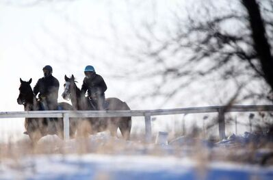 Mounts are ridden around the practice track at the back of Assiniboia Downs last month.