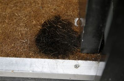 "A burnt spot, believed to be caused by the reflected rays of the sun, is seen on the doormat of a gentlemen's grooming shop across the street from the 37-storey skyscraper at 20 Fenchurch Street in the City of London, which is still under construction, Tuesday, Sept. 3, 2013. Developers for an unfinished skyscraper in central London say they are investigating the way the building reflects bright sunlight _ after claims that the intense glare melted parts of a car parked nearby. The companies behind the skyscraper, nicknamed the ""Walkie-Talkie"" because of its curved shape, are responding to complaints from the owner of a Jaguar who told the BBC that the mirror, panels and the Jaguar badge had all melted from the concentrated heat of sunlight reflected from the building. (AP Photo/Matt Dunham)"