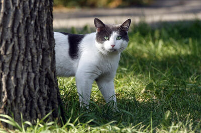 A plan to license cats and new rules for exotic animals is before council today.