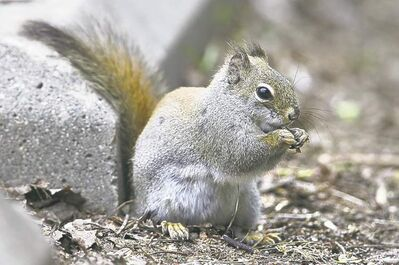 Squirrels usually remember to unearth their stores.