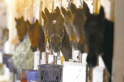 Horses in their stalls appear just as anxious to learn what's going to happen to Downs management.