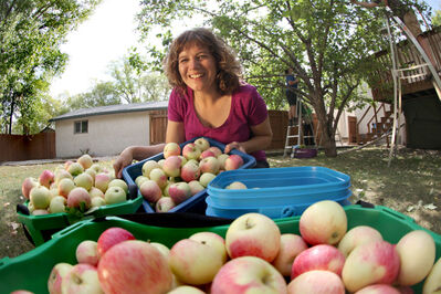 Fruit Share founder Getty Stewart poses with apples in the yard of one of the organization's donors. The harvest was split three ways between a food bank, the homeowner and the pickers.