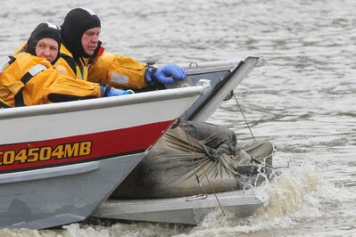 A Winnipeg water rescue crew brings a body in a bag to shore.