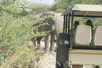 Steve Haggerty / MCT On safari drives, elephants always have the right-of-way.