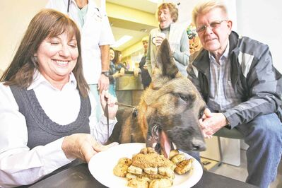 Marge (left) and Doug Thom watch proudly as their German shepherd, Demi, 5, digs into the treats at the Anderson Animal Hospital and Wellness Centre.