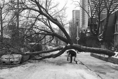 A pedestrian walks under a tree blocking a street following an ice storm in Toronto last December. The storm is among the areas of study in the now-disbanded DRI.