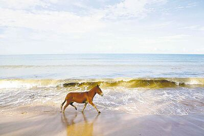 Wild horses run along the coastline in Boipeba, an island 150 kilometres south of Salvador in Brazil.