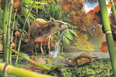 Ancient tapir and hedgehog in reconstruction of the early Eocene (52 million-year-old) fauna that inhabited rainforest around a northern B.C. lake.