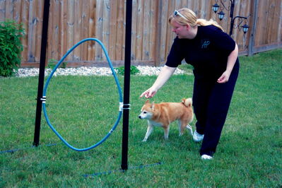 Miranda Jonasson of Active Paws leads nine-year-old Roxi through an agility course at her Transcona home.