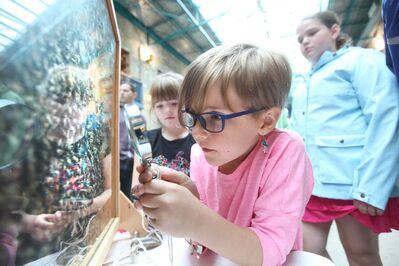 Kalila Sullivan, 6, and her sister Laney, 8, (at rear) use a magnifying glass to examine bees at work at The Forks Market Saturday as part of Culture Days. The display continues today.