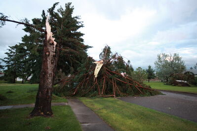 Downed trees litter the streets after a severe storm passed over the community of Pipestone Saturday evening.