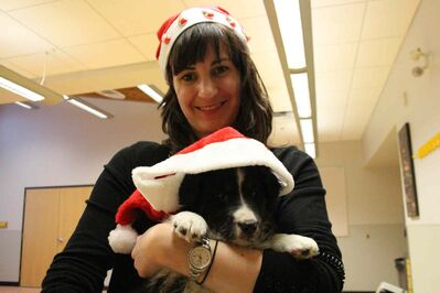 Laina Hughes, part of the donations department for the You Can't Adopt Them All campaign, holds two-month-old Reesa. Reesa is a Bernese Mountain Dog-mix up for adoption at the Winnipeg Humane Society.