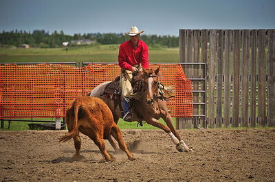 Shawn Seabrook, master trainer, will pass on his skills and knowledge at two upcoming clinics at Hi Point Horsemanship.