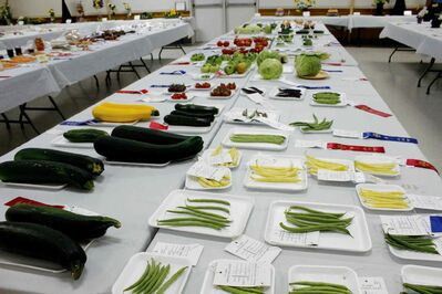 Vegetables are displayed at the exhibition.