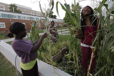 Anasta Basiliwango (from left) with mother Marie Louise and friend Amina Nziquheda tend to their garden in the newly painted Lord Selkirk Park Monday.