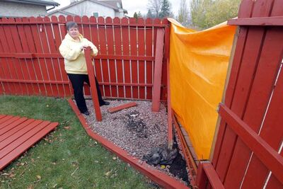 On the first pickup on Oct 5, the driver made an error and took down part of my fence. Two posts were broken and a section of the fence came down. In his defence, the driver did stop and call it in, apologized to me and offered to tie the big piece back up -- I got a tarp and a staple gun from the garage and he put that in place for me. I am a widow and this was much-appreciated. (She then recounts more than two weeks of phone calls to 311, deputy mayor Justin Swandel, the city's water department, the new waste-collection company, and an insurance company -- but her fence still isn't fixed) --Terry Cannon