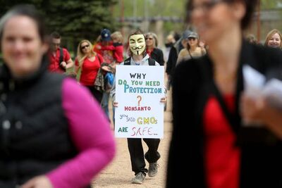 A person wears a Guy Fawkes mask while protesting against GMO food and Monsanto at The Forks Saturday.