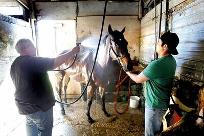 Allan Besson gets his feet wet as a groom, bathing Moment of Song at Assiniboia Downs with groom Travis Gardipy.