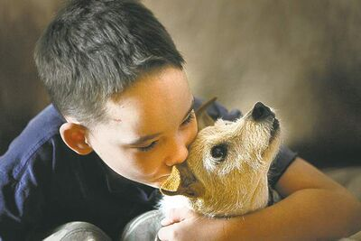 Cole Hein with Bingo back in 2010 before the dog was inducted into the Purina Hall of Fame. Cole, with the help of generous Free Press readers, is determined to make Bingo's final days fun and delicious.
