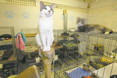 Sitting pretty at Quagga Stray Cat Rescue. While no-kill shelters paint the WHS as a feline death camp, the society says if it didn't do what it does, you wouldn't be able to drive to work without seeing a dead cat.