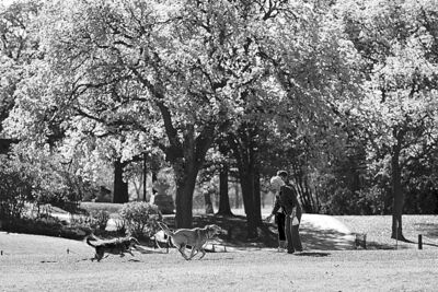 Two women walk their dogs behind the Assiniboine Park pavilion.