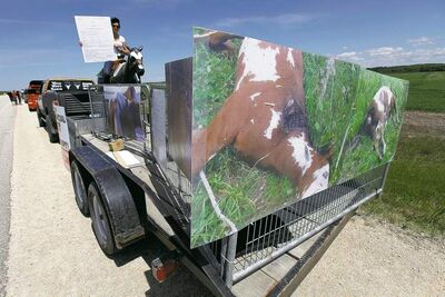 Bonnie Riddell and a group gathered in front of Aesgard Ranch on Highway 8 Saturday in response to alleged animal abuse armed with photos of suffering horses allegedly taken at the ranch.