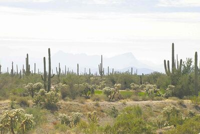 There is a rugged beauty in the hillsides around Tucson.
